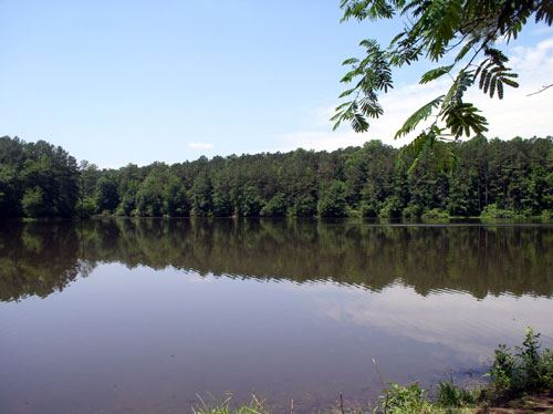 Placid lake surrounded by trees