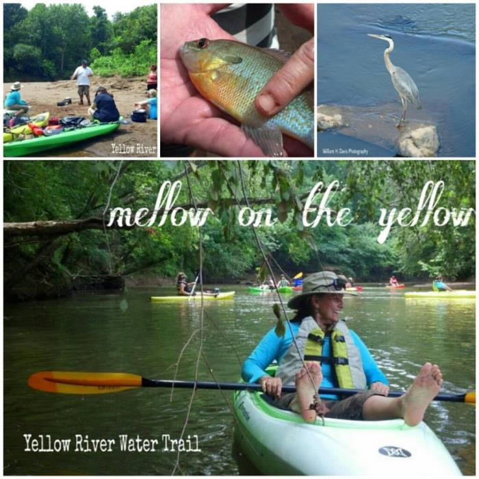 Mellow on the Yellow collage of images